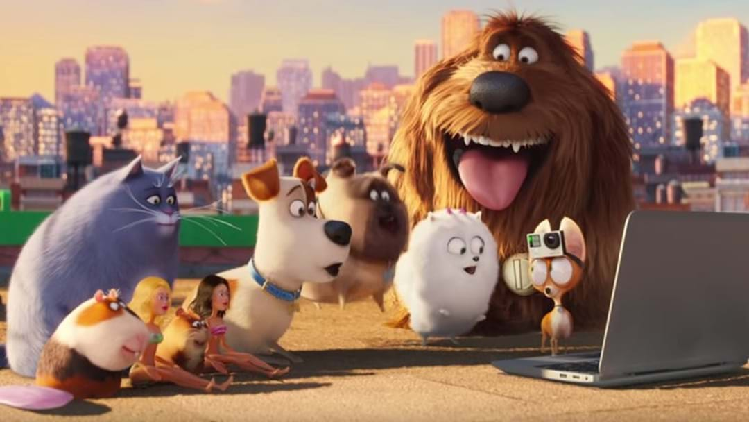 See 'Secret Life Of Pets' Outdoors This Friday!