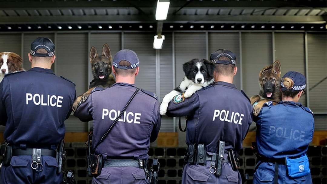 Several Drug Arrests Over The Weekend