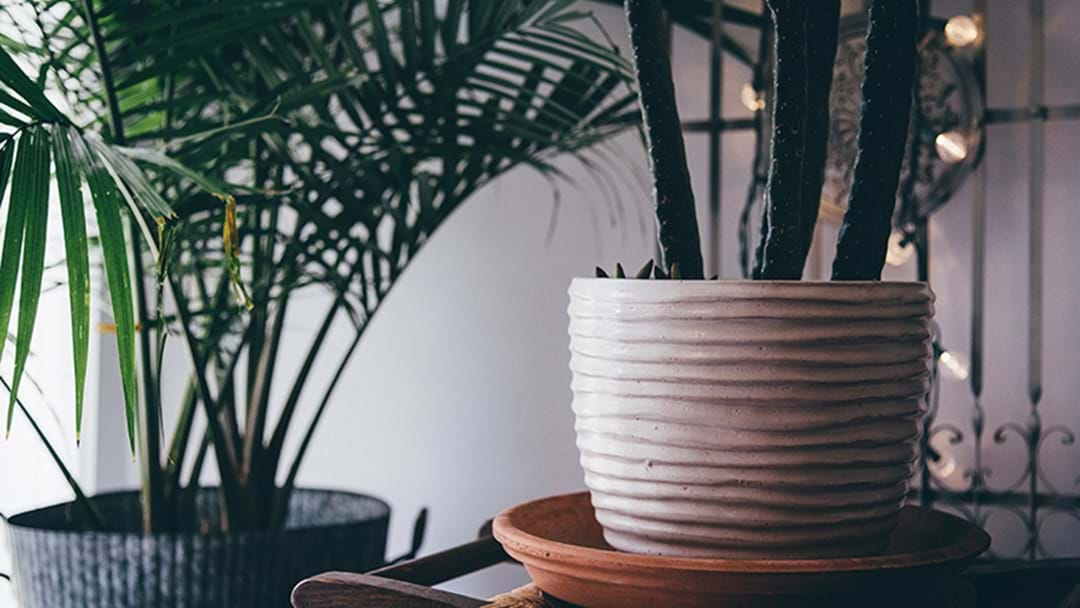 These House Plants Are Perfect For People Who Always Kill Theirs