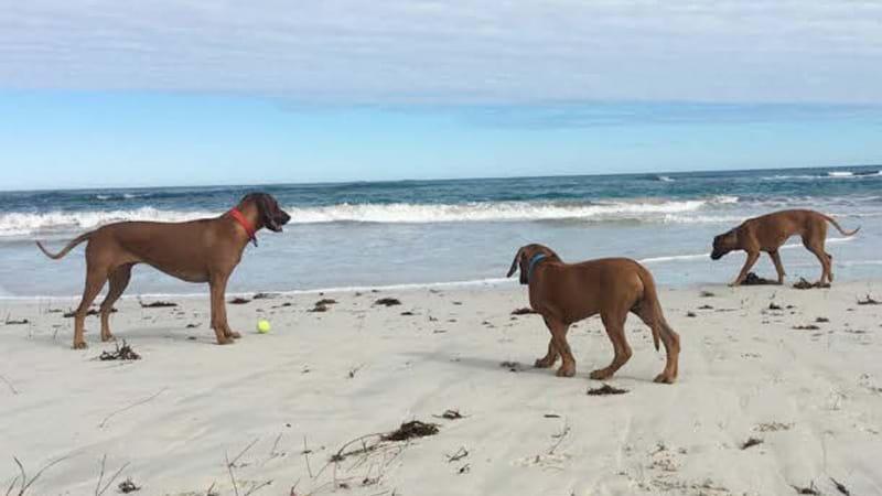 Dog Friendly Beaches Perth