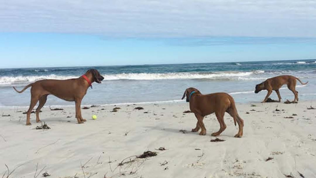 Perth's Dog Friendly Beaches Where Your Pup Can Run Free