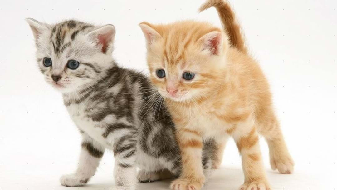 Calls To Cap The Number Of Cats Allowed Per Household