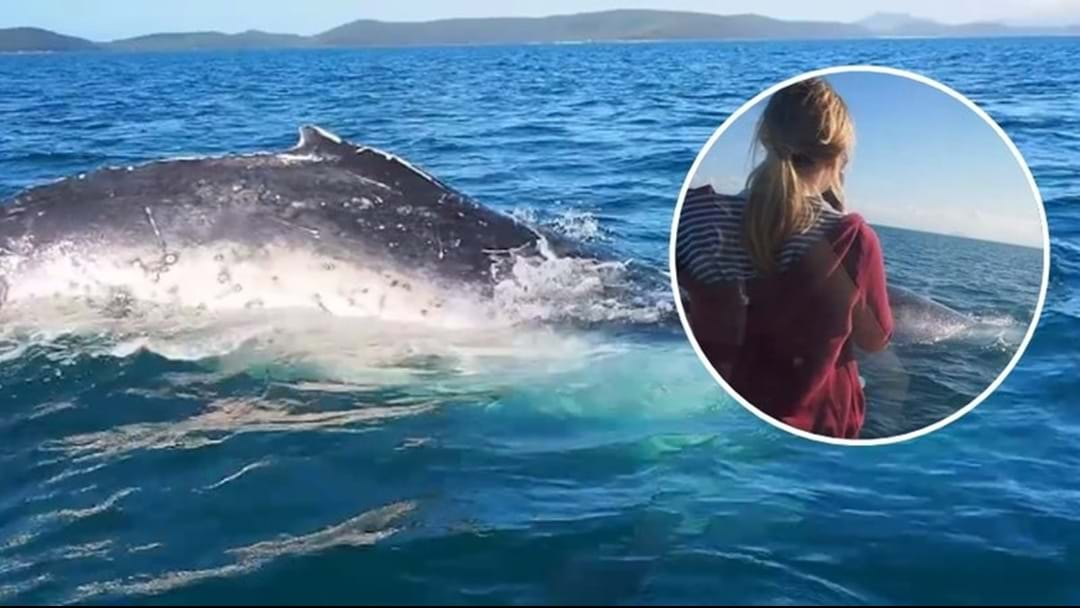 WATCH: Whales Showing Off In Townsville Waters