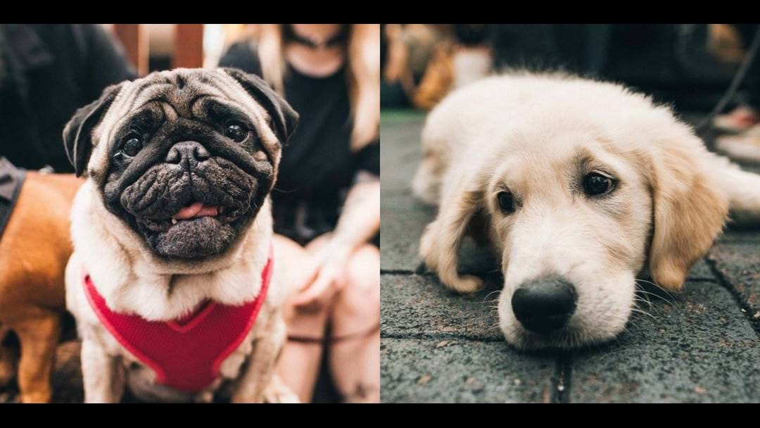 BRISBANE: Grab A Cheeky Bev With Your Dog Here This Weekend