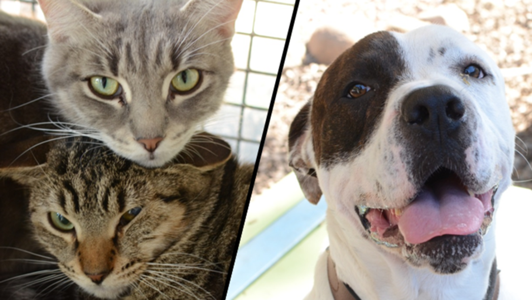 These Townsville RSPCA Animals Need You