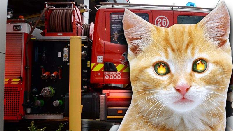 Article heading image for Someone's Pet Cat Almost Burned Down An Adelaide House Last Night!