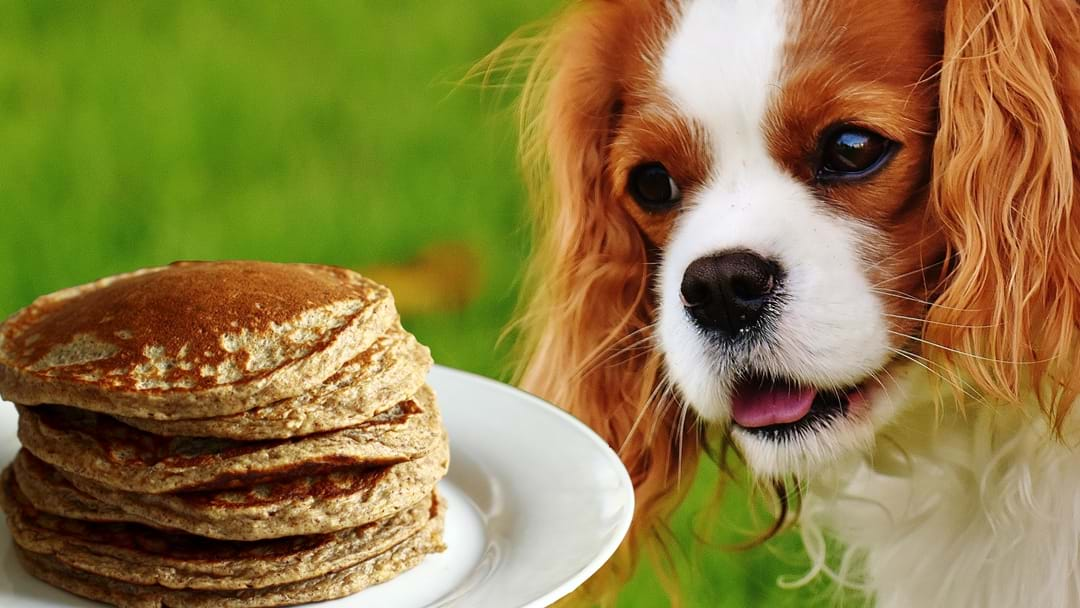 This Melbourne Pancake Parlour Has A Dining Room For Dogs