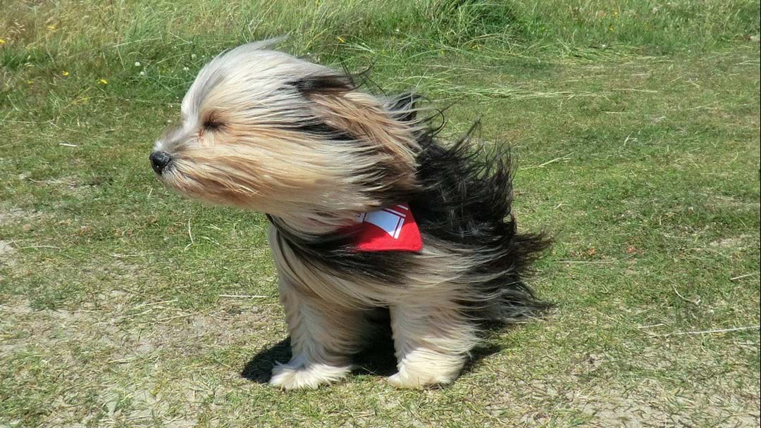 It's Official… Today Is 'Easily' Sydney's 'Windiest In Years'