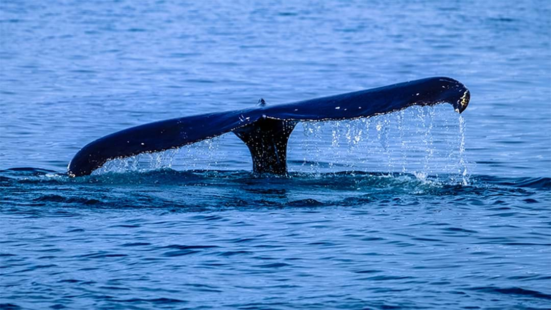 Whales Have Been Spotted Just Off The Coast From Perth