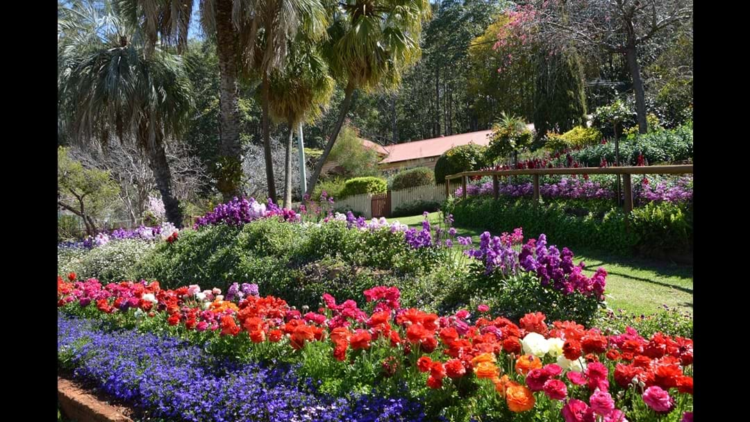 FIVE Things You Have to Do at Toowoomba's Carnival of Flowers