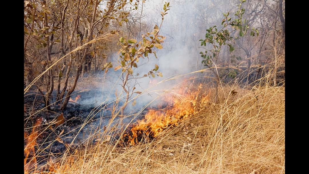 McGowan Labor Government strengthens bushfire risk identification