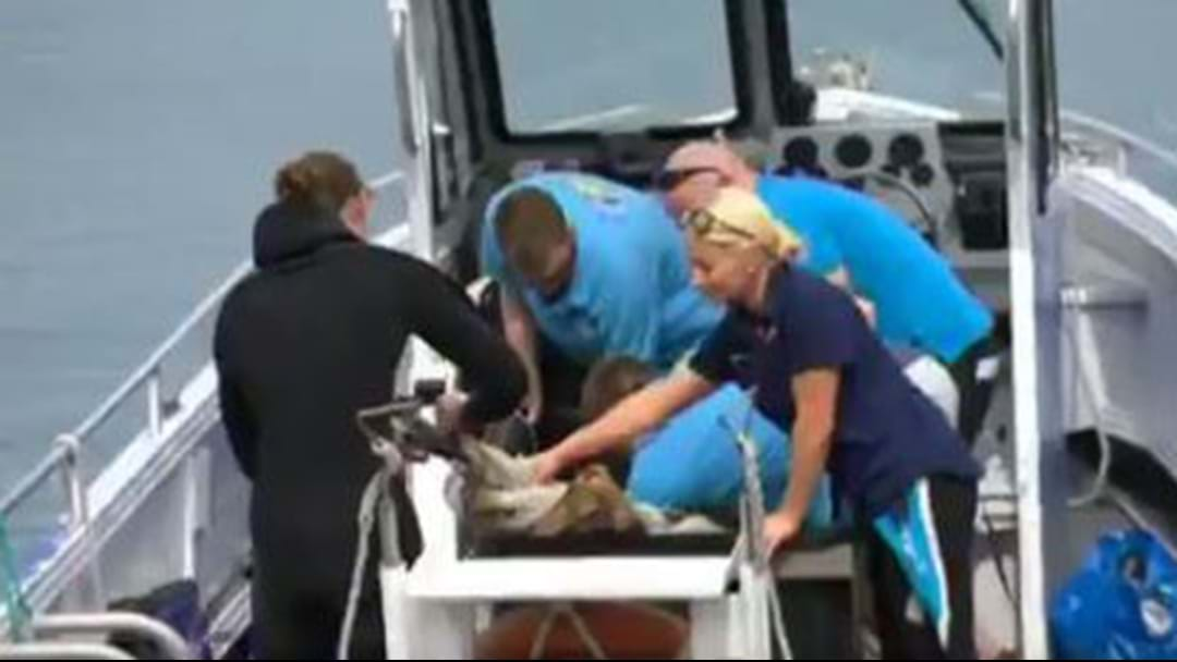 Fluffy The Shark Has Been Released Back Into The Ocean