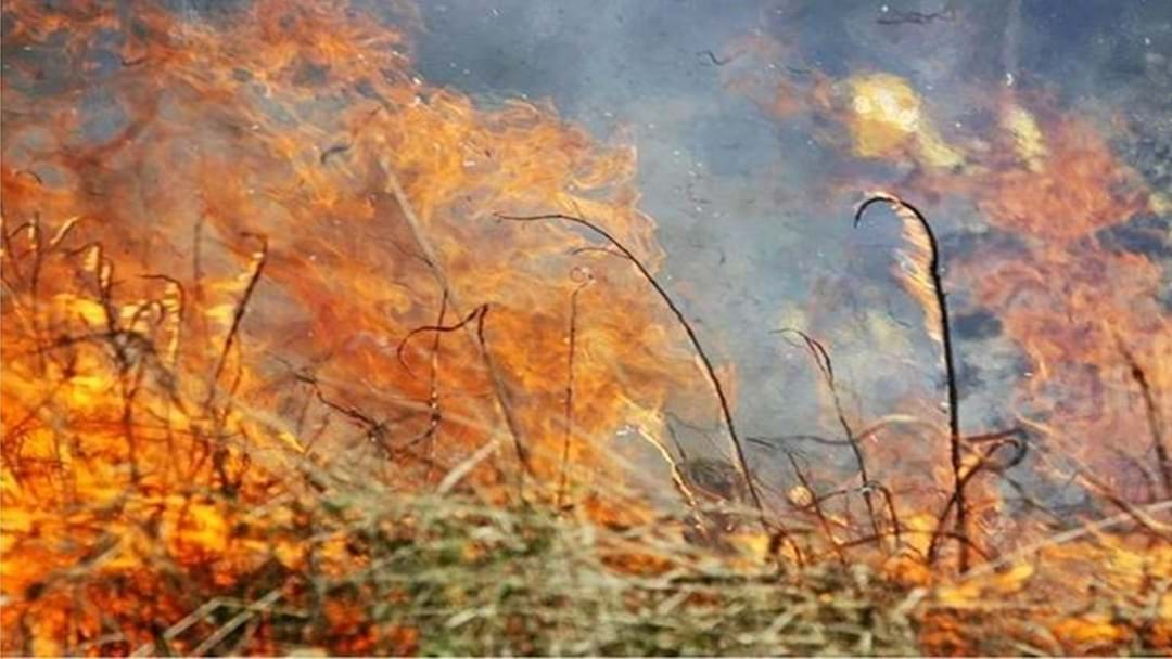 Report Predicts Bushfire Seasons Will Worsen