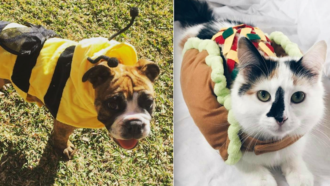 Kmart's $7 Halloween PET Range Is Here & Get Your 'Trick Or Treat' On
