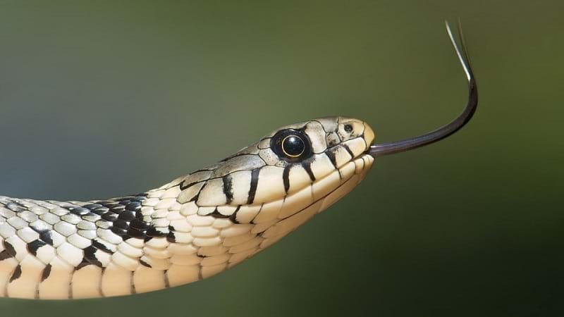 Article heading image for These Are Most Popular Suburbs For Spotting Snakes In Your Cities