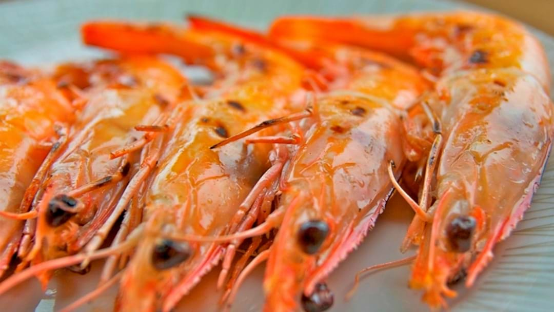 No Prawn Problems for Hunter This Christmas
