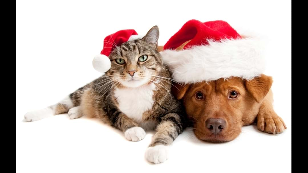 Christmas Tips For Townsville Pet Owners