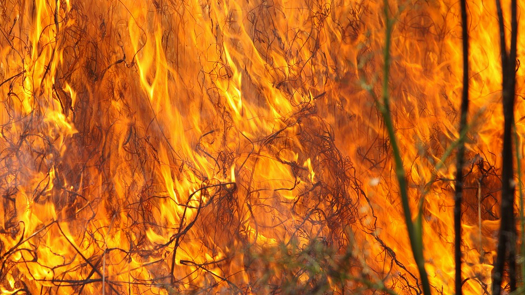 FIRE BAN: Burning Banned Across Gold Coast This Weekend