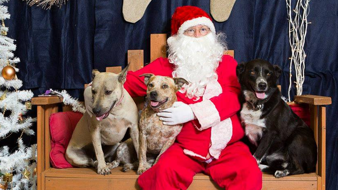 Your Furbaby Can Get Santa Photos Next Month