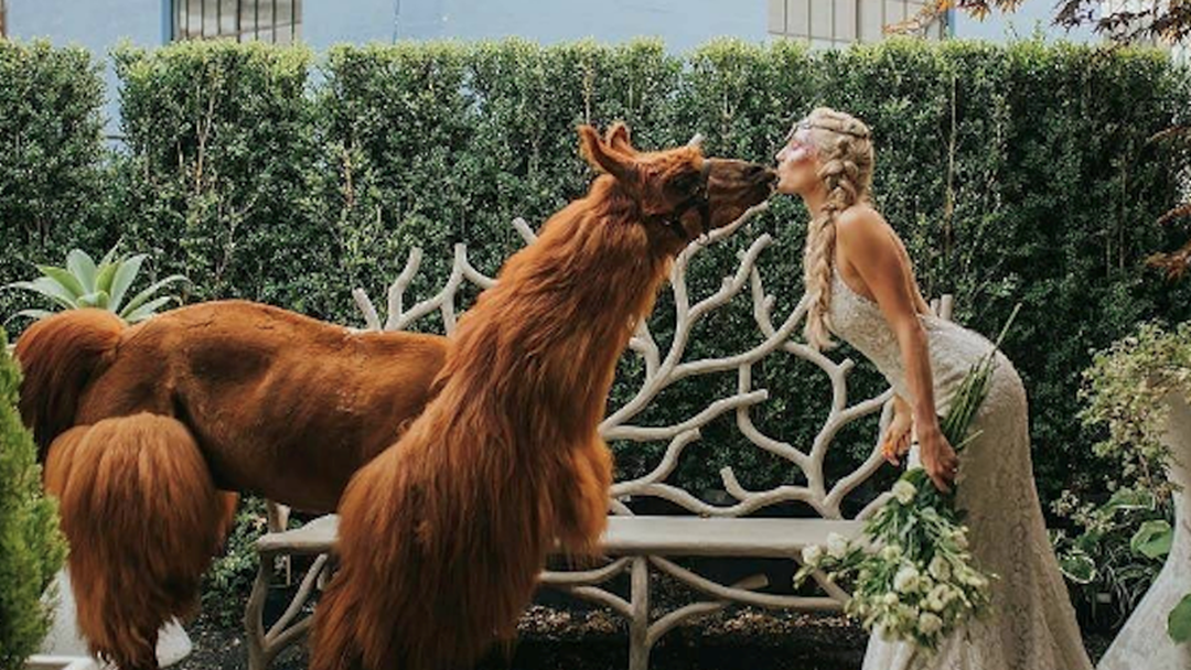 Wedding Llamas Are A Thing & Who Wants One?!