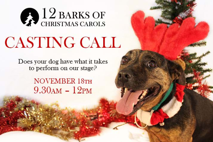 CALLING ALL TALENTED POOCHES!