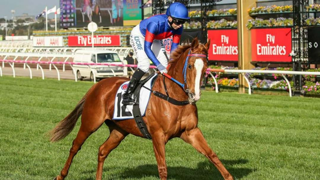 ALL EYES ON CANBERRA HORSE IN MELBOURNE CUP