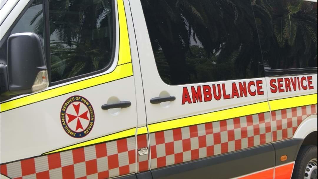 Drivers Urged to Avoid Kangaroos