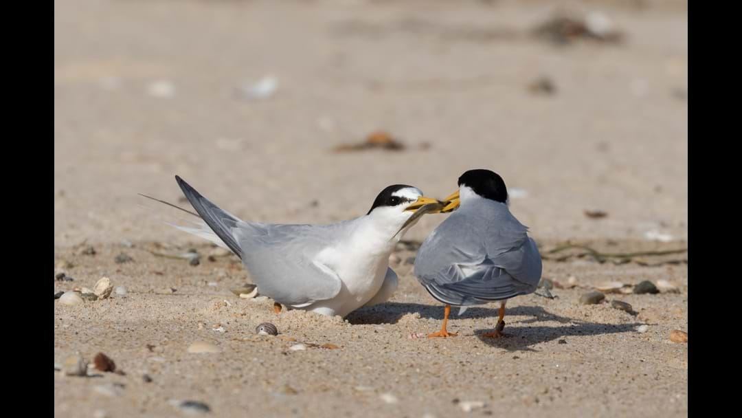 Some good Terns deserve another