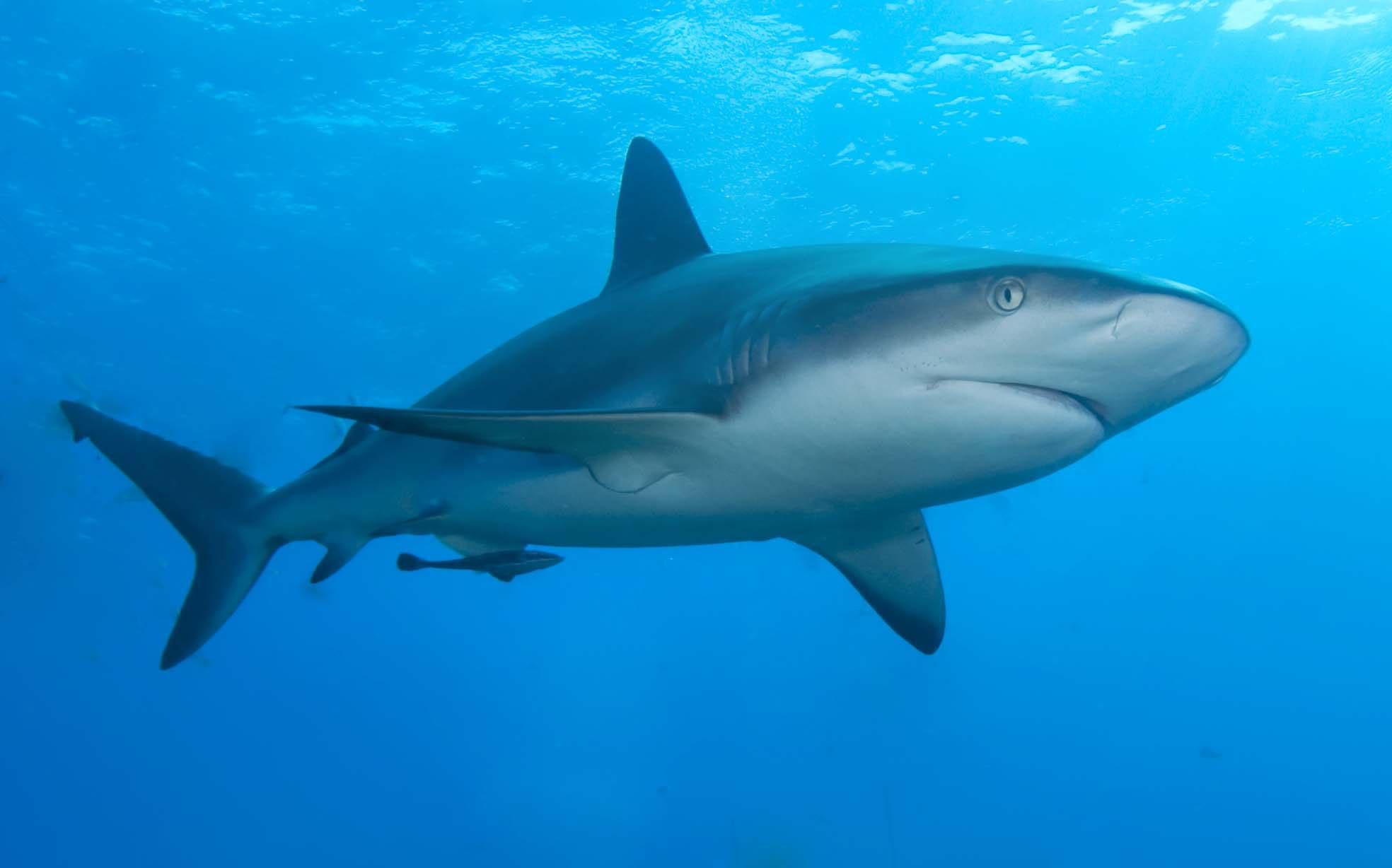 Article heading image for Shark Attack at Nambucca Heads