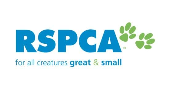 RSPCA investigates video of dog being kicked on Gold Coast