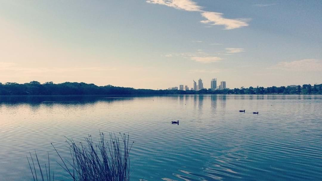 Get Set For A Stinky Swan River