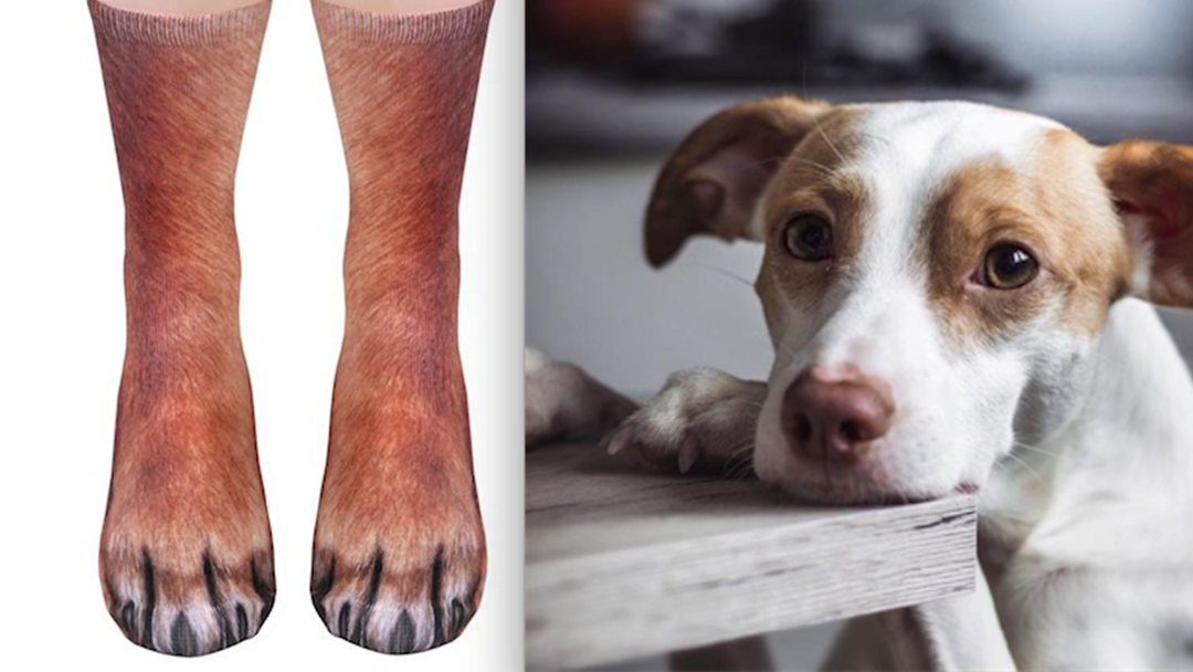 You Can Now Match Your Pet With These Paw-dorable Socks