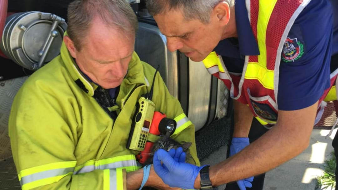 CAT RESUSCITATED AFTER HOUSE FIRE