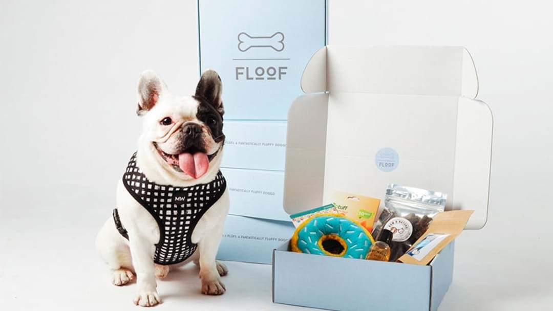 Not Sure What To Get Your Pooch For Christmas? 'Floof' Is What You've Been Waiting For