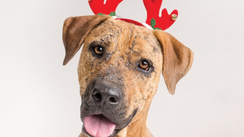 Article heading image for Not Into Chocolate? Follow The Townsville RSPCA Advent Calendar Instead