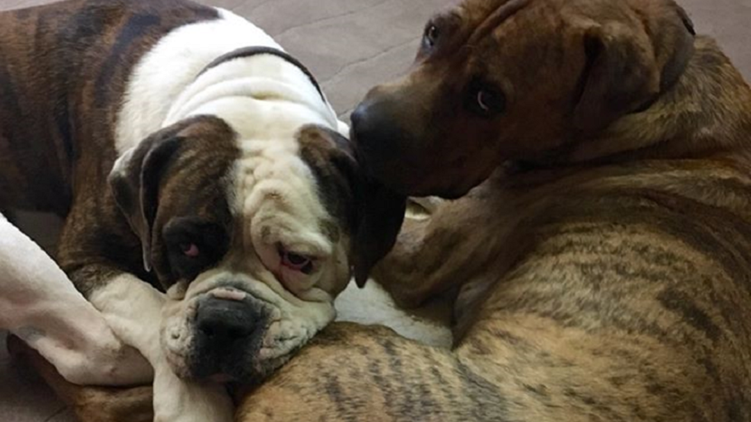 Mayor back in hospital after playing with pooches