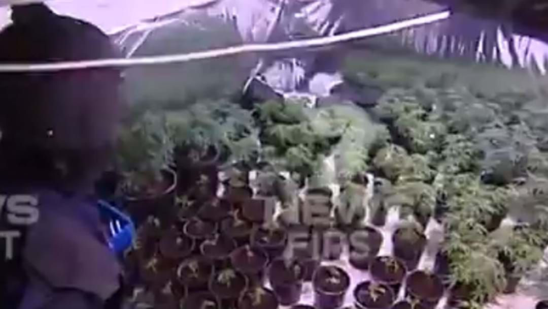 Hundreds Of Cannabis Plants Seized After Police Raids Across Sydney