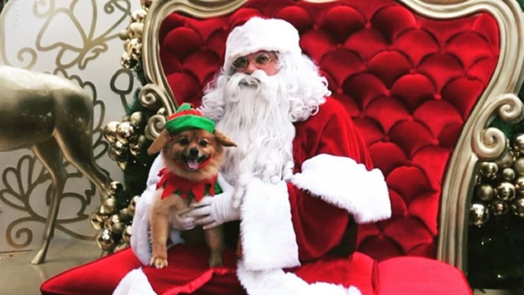 The Top Spots To Get Santa Pet Photos In Sydney