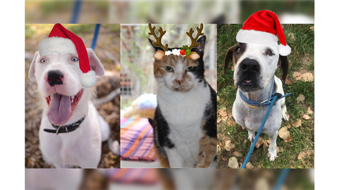 Townsville RSPCA Pets Get Helping Hand To Find Homes Before Christmas