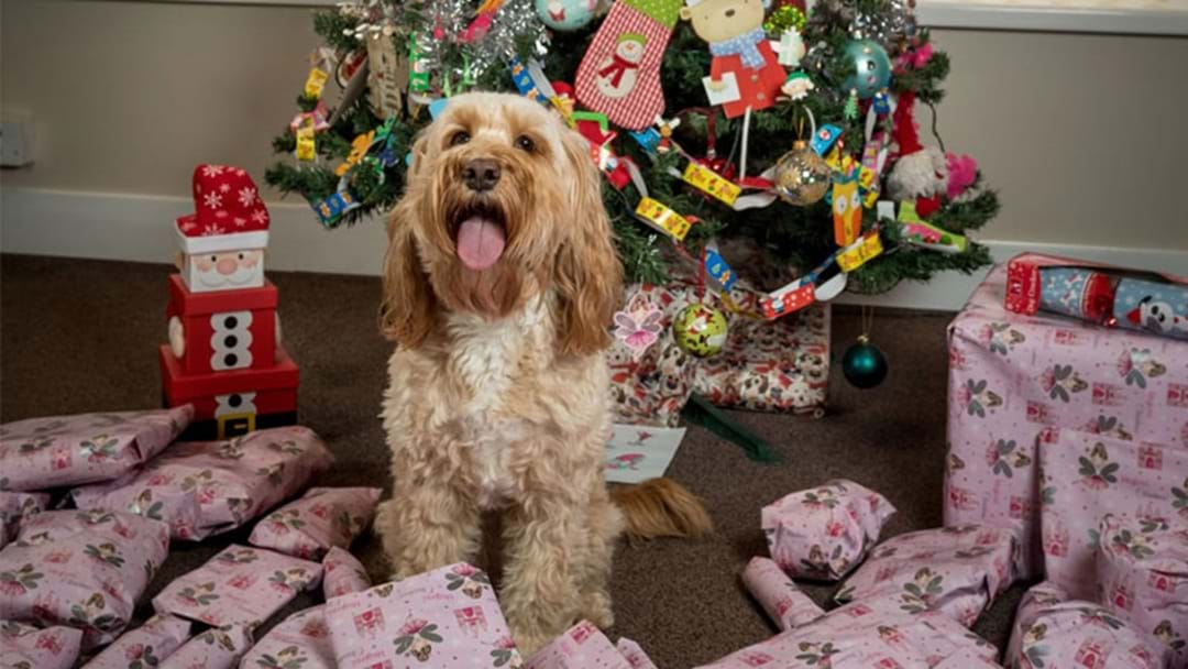 Most Relatable Woman Of The Year Drops $2K On Dog's Christmas Presents
