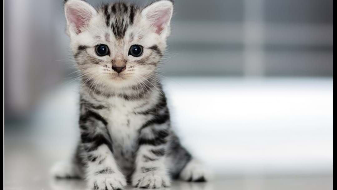 RSPCA QLD Desperately Needs Kitten Foster Carers At The Mo
