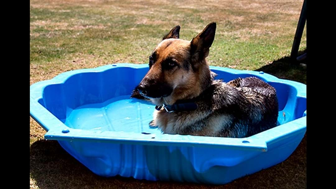 RSPCA Pleads For Pet Owners To Prepare For The Heat