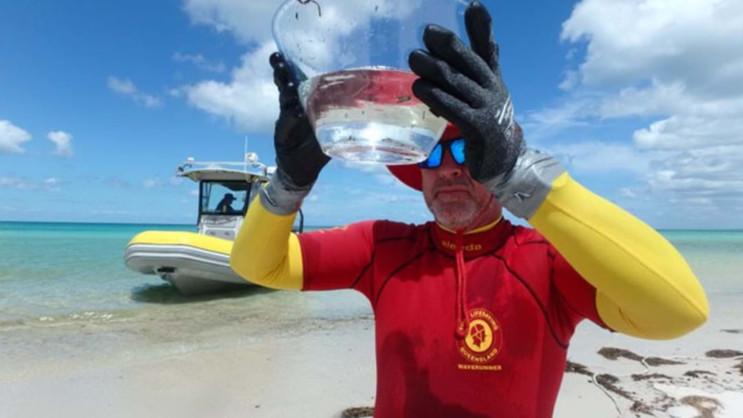 Irukandji Jellyfish Discovery At Fraser Island Sparks Beach Warning