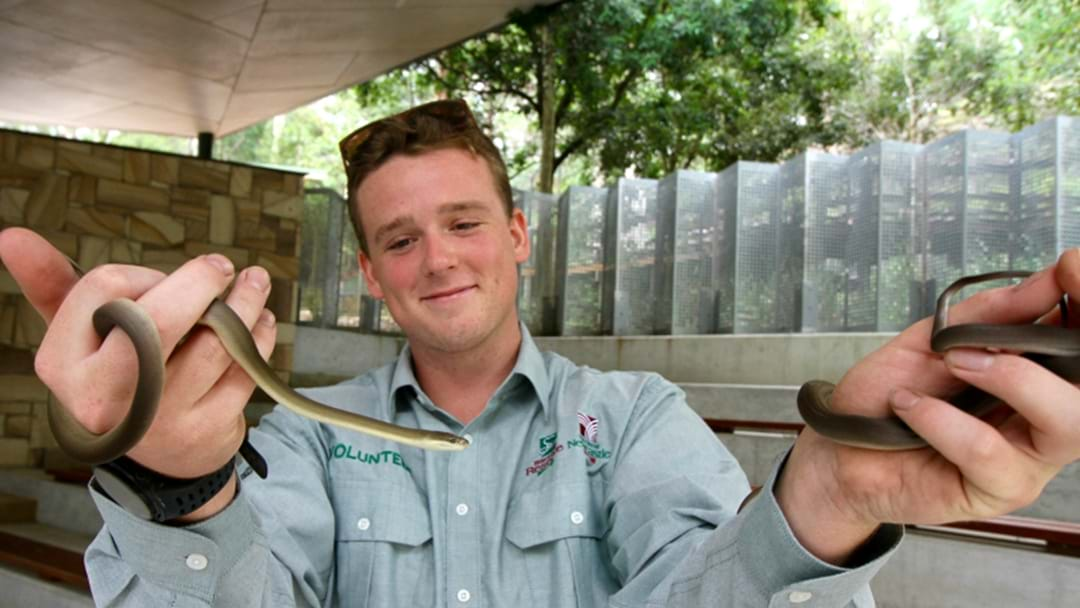 New Reptiles For Blackbutt Reserve