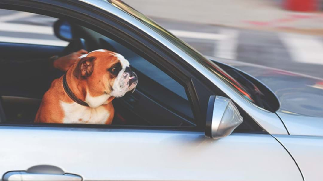 RSPCA Receive More Than Four Calls A Day About Pets In Hot Cars