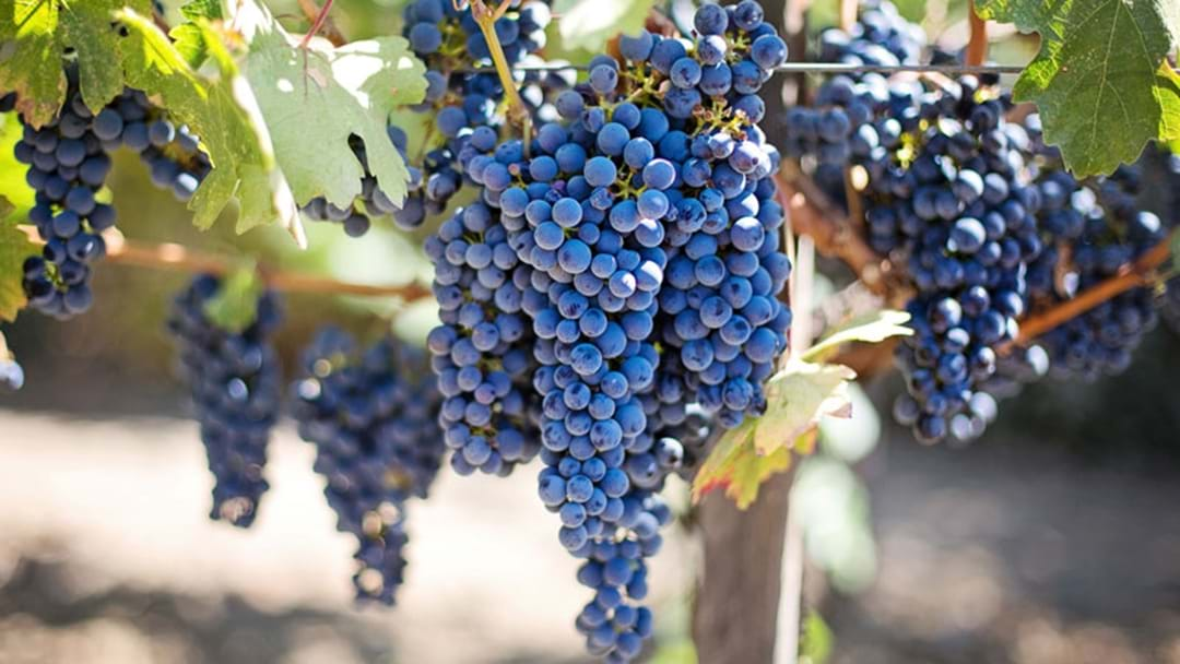 Stay In The Know: Merlot Set To Take Over As Most Sought-After Red Wine
