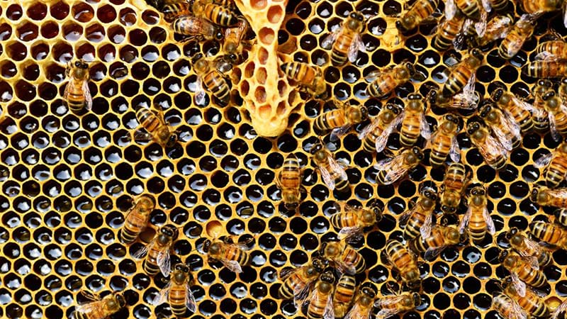 Article heading image for Sydney Residents Furious After 50,000 Bees Poisoned By Council