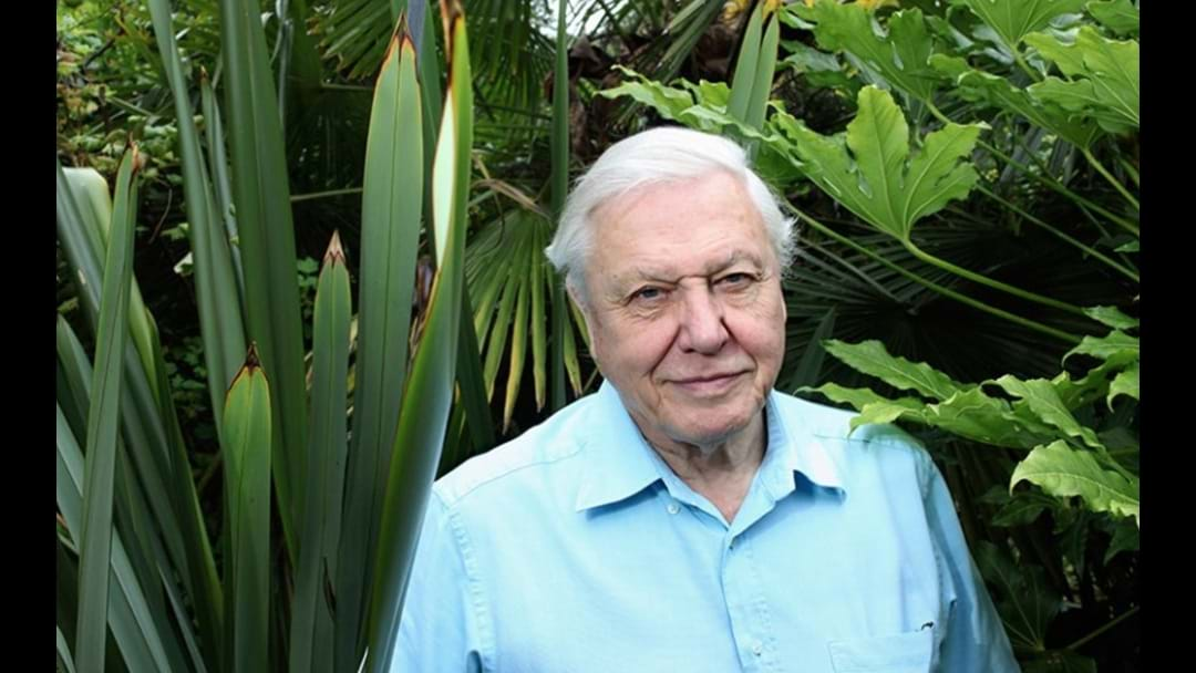 Sir David Attenborough Is Bringing His Epic 'Planet Earth II' Live Tour To Australia!