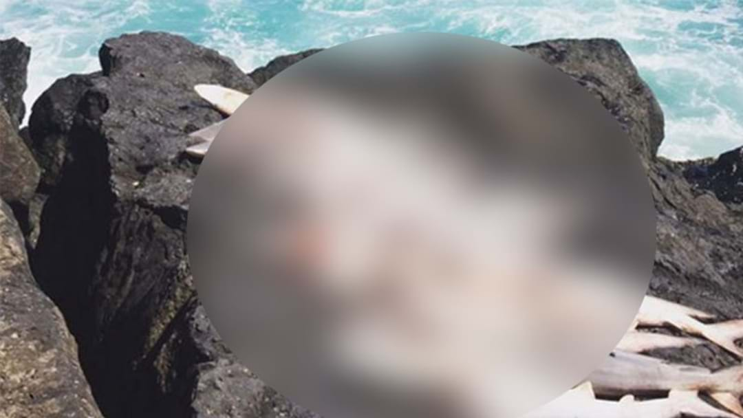 Outrage As 15 Mutilated Sharks Found On Rock Wall