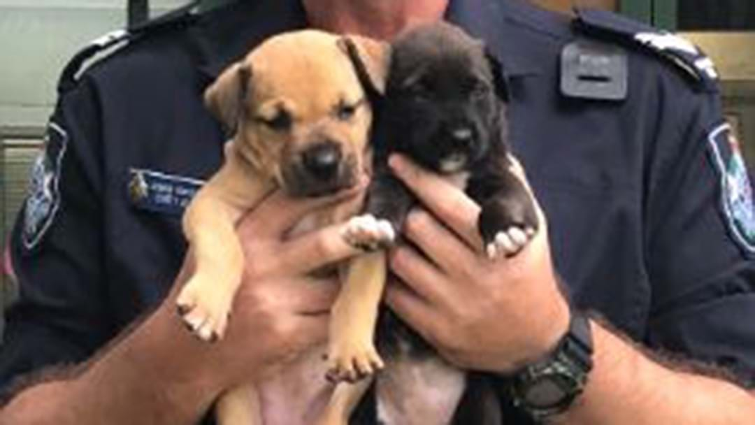 Police Save Two Stranded Puppies In Flooded Archer River